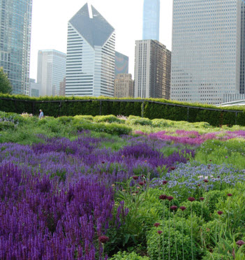 downtown-chicago-garden